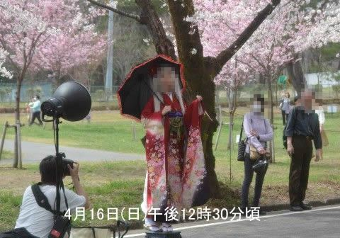 桜の木の下でコスプレ撮影会の様子