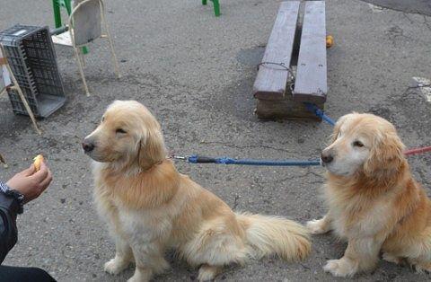 看板犬インディーとマーカスにパンをあげてるところ