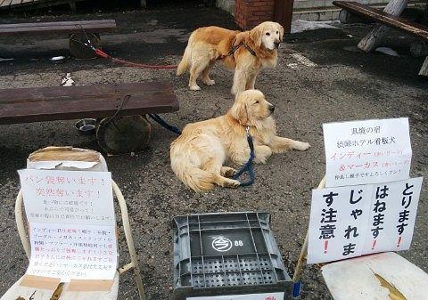 渋峠ホテル看板犬のインディーとマーカス