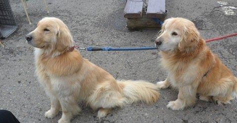 お座りの合図で座る犬