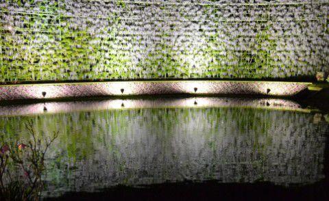 池に映る藤壁