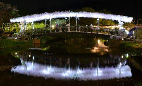 ライトアップされた藤棚の橋