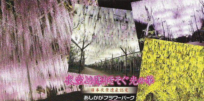 パンフレットにある夜の藤棚の景色
