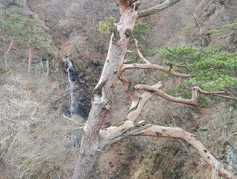 子守松と不動の滝