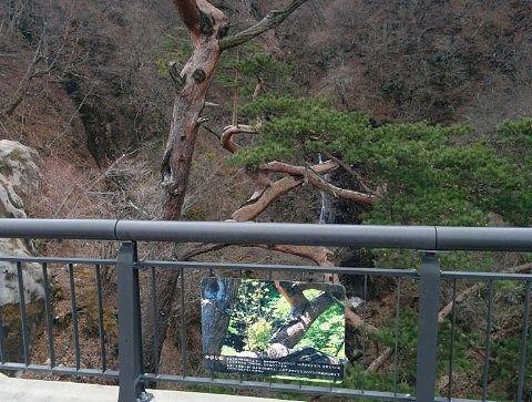 橋から見える不動の滝