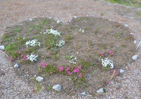 ハート形の花壇