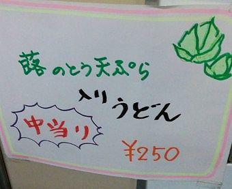 中当たりフキノトウ天ぷらうどん