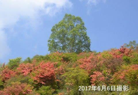 新緑とつつじの景色