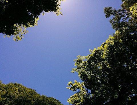 露天風呂から見える空