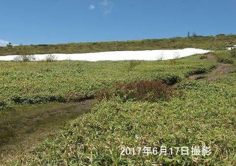 6月の残雪の様子