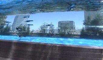 天空のペンギン水槽
