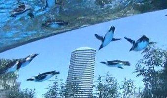 ペンギンとビルの景色
