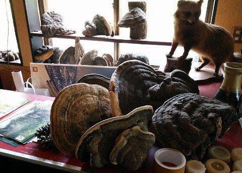 きつねの剥製と猿の腰掛