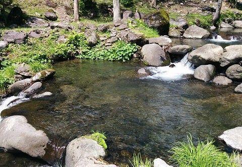 渓流釣り場の様子