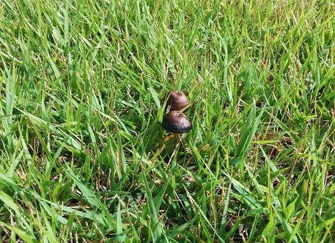 庭に生えてたキノコ