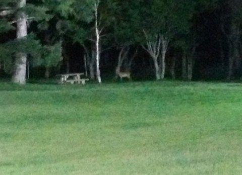 中庭ベンチ近くにいた鹿