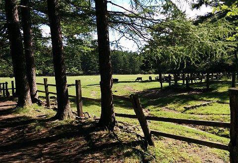 光徳牧場の放牧場の様子