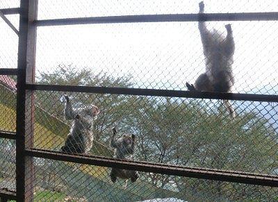 金網越しに見える猿