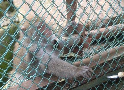 猿のエサやり