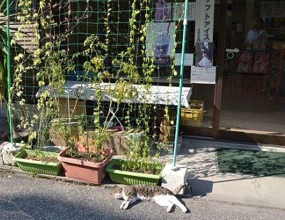 大谷石体験館の看板猫