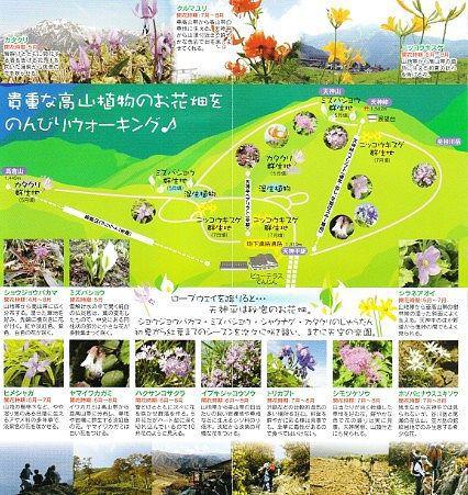 高山植物群生パンフレット