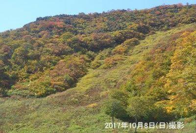 天神平の紅葉の様子