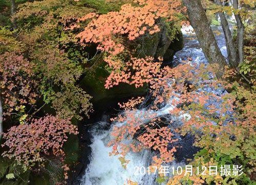 橋から見える竜頭の滝の紅葉