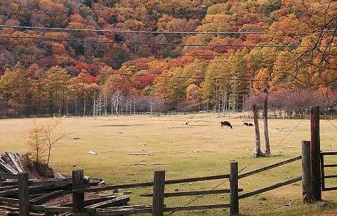 ホテル側から見た放牧場