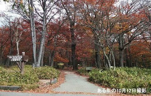 光徳園地の散り始めた紅葉の様子