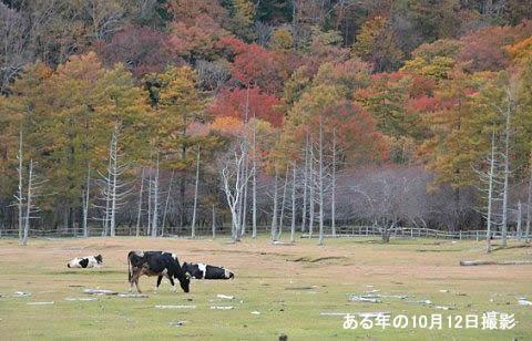 紅葉のピークを過ぎてしまった放牧場の様子