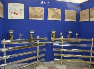 海蛇の展示コーナー